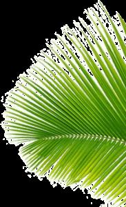 Coconut Black - controindicazioni - effetti collaterali