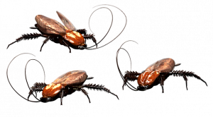 Pest Away Mini - come si usa - funziona