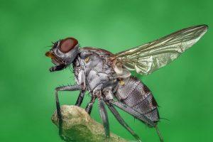 Pest Away Mini - forum - opinioni - recensioni