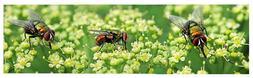 Pest Away Mini - prezzo - dove si compra - in farmacia - amazon