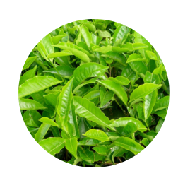 Re-Lipo Green - in farmacia - prezzo - dove si compra - amazon