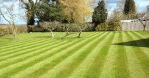 Perfect Grass - Italia - sito ufficiale - originale