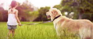 Good Doggie - effetti collaterali - controindicazioni