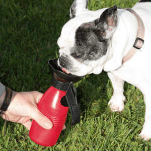 Doggy Bottle - prezzo - amazon - dove si compra - in farmacia